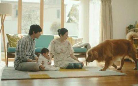 """日本购物网站""""亚马逊""""推出宠物犬为主角的新广告却""""害惨""""了不少宠物"""