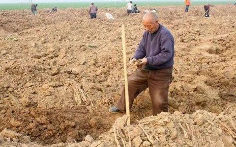 在自家菜地挖出古物擅自改装专家赶来鉴定老农吓得汗出如浆